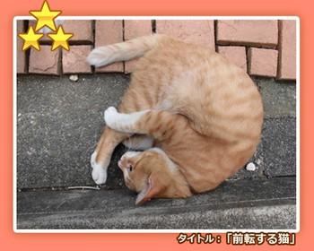 先生と迷い猫.jpg