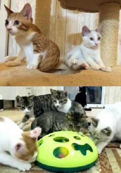 子猫譲渡会-1.jpg