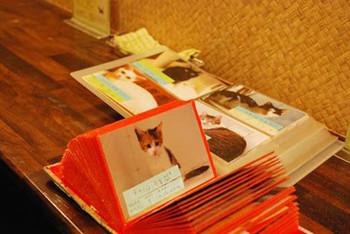 子猫譲渡会-2.jpg